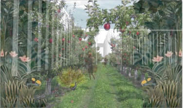 Apple Orchard sketchup